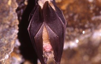 Torbay Coast and Countryside Trust - Berry Head Bat Walk, Berry Head, Brixham, Devon