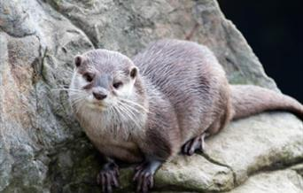 World Otter Day - Living Coasts, Torquay, Devon