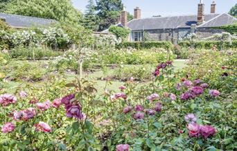 Rose Garden - Cockington