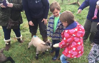 Meet Our Animals, Occombe Farm, Paignton, Devon