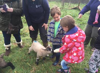 Torbay Coast and Countryside Trust - Meet the Occombe Farm Animals