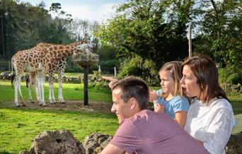 Family watching the giraffes at Paignton Zoo in Devon